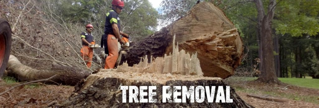 Stumps and Trees Removal
